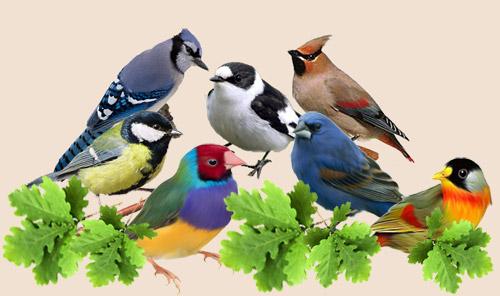 тот кто изучaет птиц