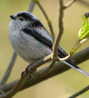 Гифки с птицами красивые анимации с птичками