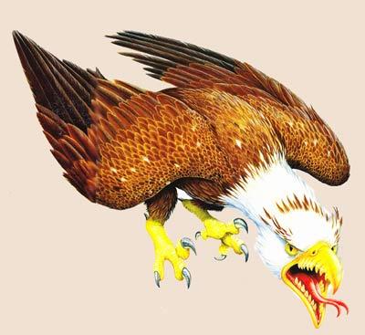 фото птица рух